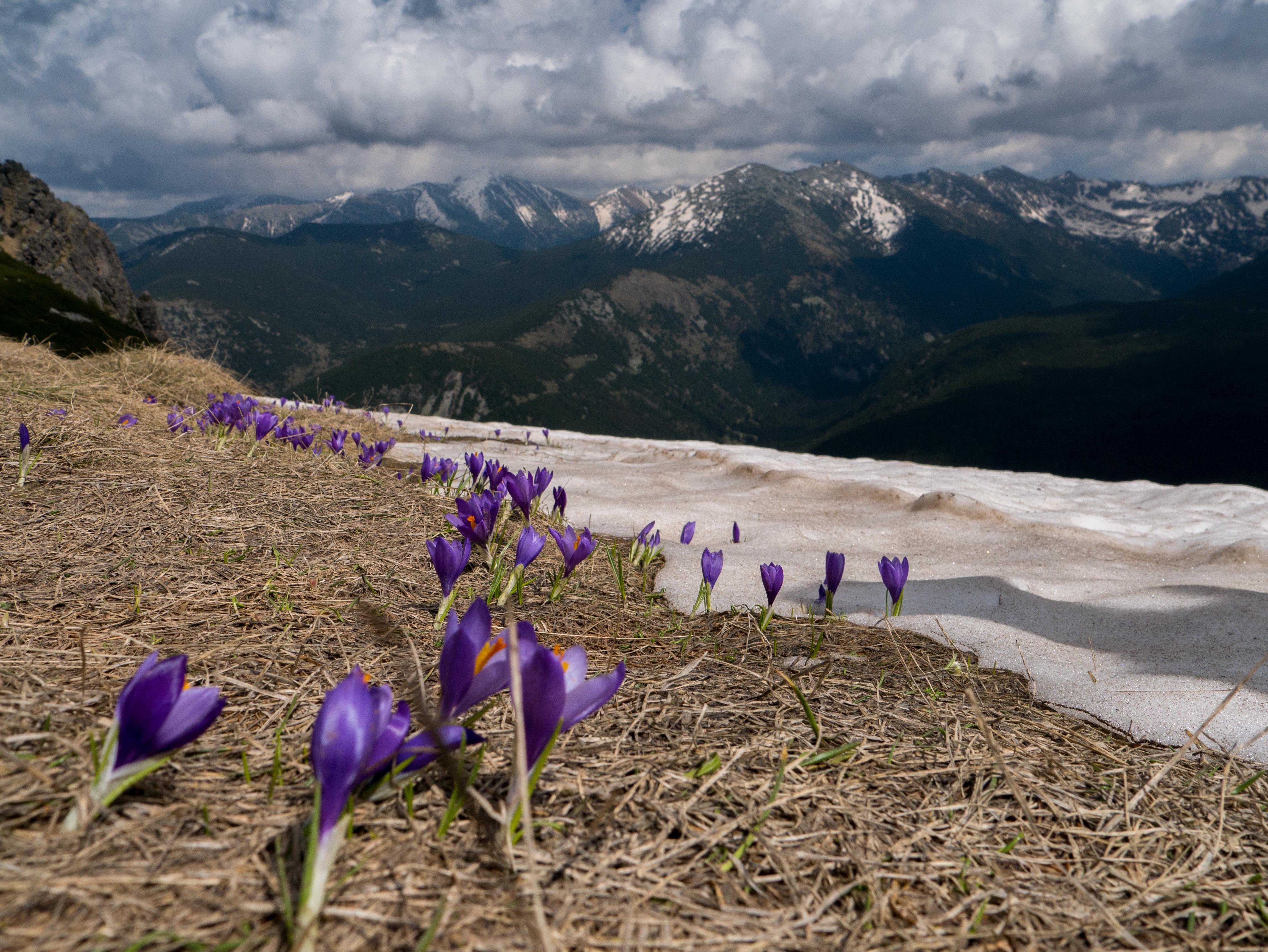 Биосферен резерват Парангалица в Рила: връх Мусала на изкачване към връх Мечит. Автор: Иван Стефанов Коев. Лиценз: CC-BY-SA 4.0. Източник: Общомедия
